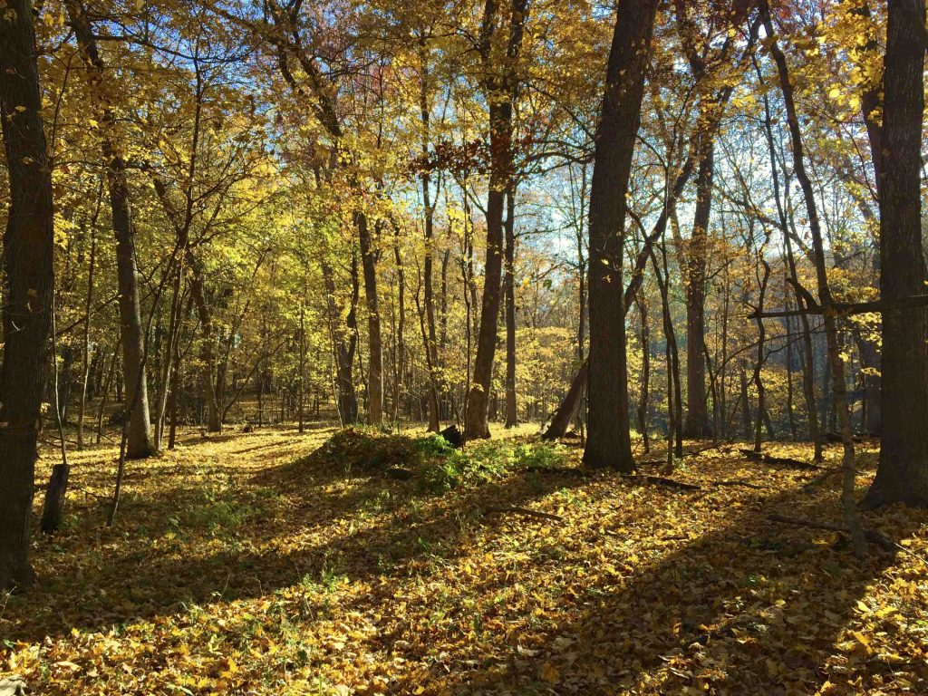 Amana Colonies Nature Trail in fall season